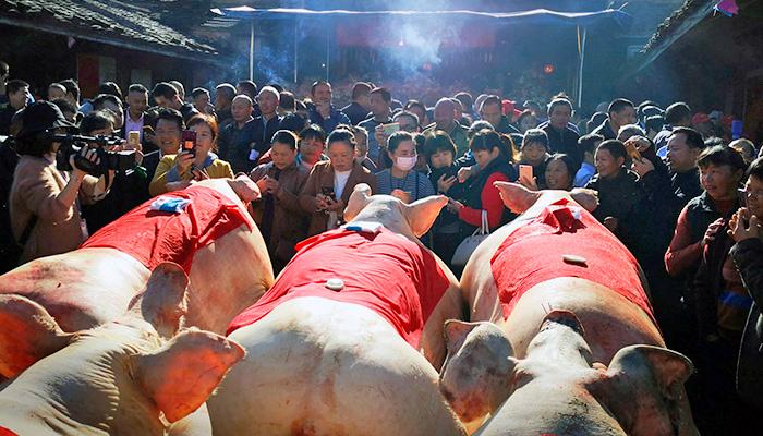 Свиньи на китайских фермах